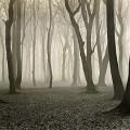 Renger-Patzsch trees, 1936. bigger